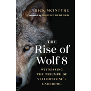 McIntyre, R: The Rise of Wolf 8