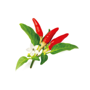 Click & Grow RED HOT CHILI PEPPER PLANT PODS