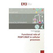 Functional role of PEBP1/RKIP in cellular processes