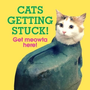 Cats Getting Stuck!