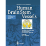 Human Brain Stem Vessels - Including the Pineal Gland and Information on Brain Stem Infarction