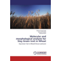 Molecular and morphological analysis for Stay Green trait in Wheat - Stay Green Trait in Wheat(Triticum aestivum)